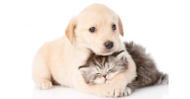 Alanyas resturanter, kæledyr på restauranter, dyr på restauranter