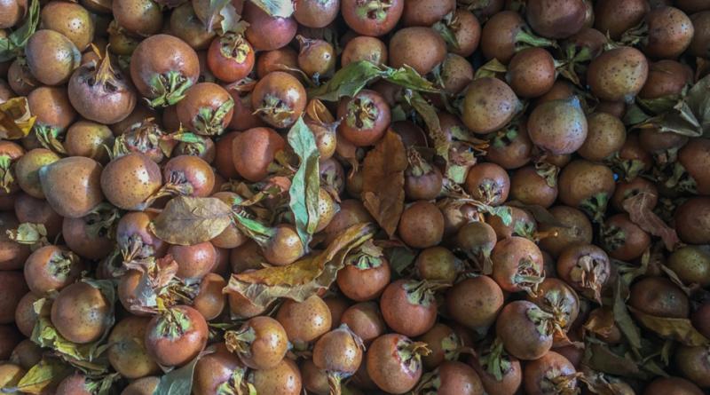 Döngel, mispel, mispel frugt, döngel frugt, eksotiske frugter, eksotiske frugter fra Tyrkiet, Eksotiske frugter fra Alanya, Mispel fra Tyrkiet, tyrkiske mispel, tyrkiske Döngel