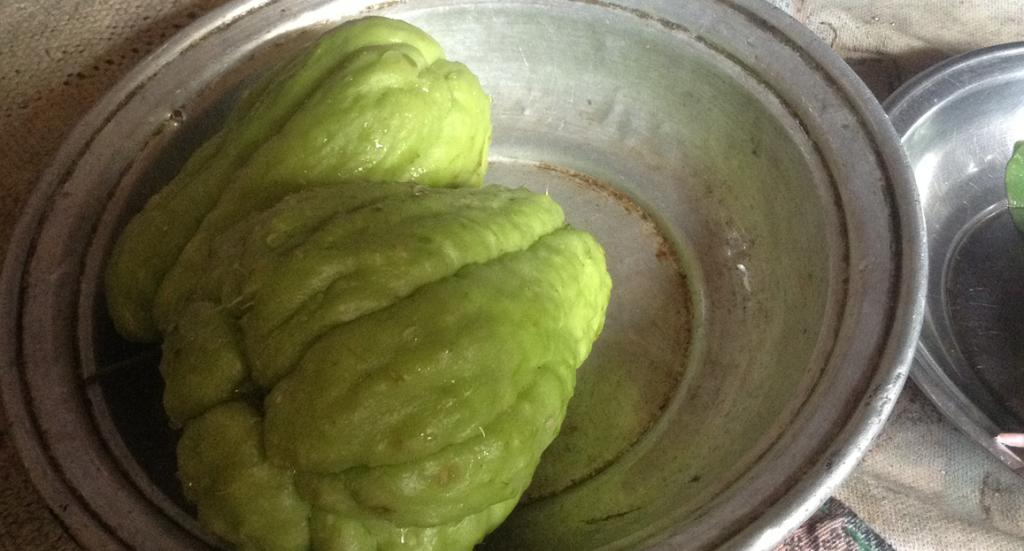 specielt græskar, diken kabakgi, tyrkisk græskar, græskar fra tyrkiet