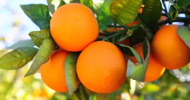 Appelsiner, tyrkiske Appelsiner, appelsiner fra tyrkiet, guide til alanya, alanya guide, alanya dk, frugter fra tyrkiet