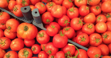 tomat marked, marked alanya