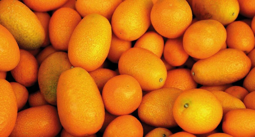Kumquat, eksotiske citrus frugter, små appelsiner, de små appelsiner kumquat, miniature appelsiner, eksotiske frugter, eksotiske frugter fra Alanya