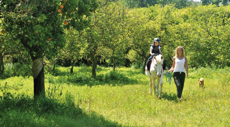 Alanya rideskole, horse village alanya, alanya horse village, rideskole tyrkiet, tyrkisk rideskole, rideskole oba, oba rideskole