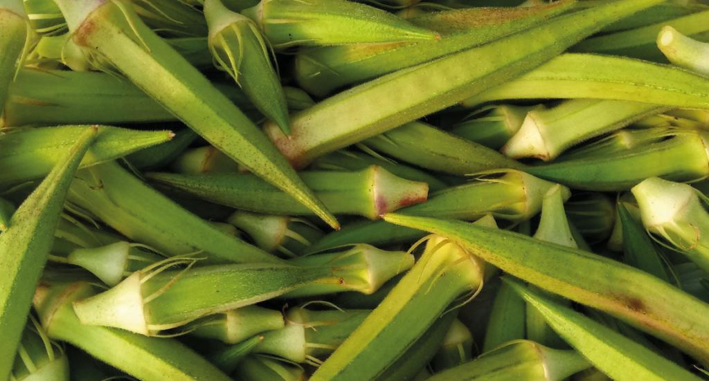 Okra, bamya, hvad er okra, tyrkiske okra, okra fra tyrkiet, markeder i alanya, Alanya markeder, alanya bazar, bazar i Alanya, grøne aflange bønner med kanter, bønner med runde kerner
