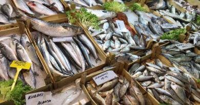 Tyrkiske fisk, Tyrkiske fisk i alanya. alanya fisk, fiske parlør, fisk på tyrkisk, køb fisk i alanya, laks i tyrkiet, ferie i alanya, tyrkisk parløs, oversigt over tyrksike parlør, dansk tyrkisk parlør, Fiskesæsonen, fiskesæson middelhavet, hvornår er der fskesæson i tyrkiet, tyrkiets fiskesæson, sæson for fisk, sæson for fisk i Alanya, fiskehallerne alanya, alanya fiskehaller,
