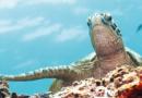 Havskildpadder i Alanya