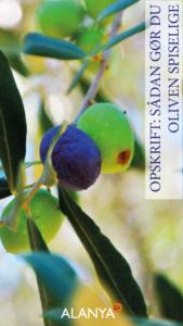 Opskrift på spiselige oliven, sådan gør du oliven spiselig, lav spiselige oliven
