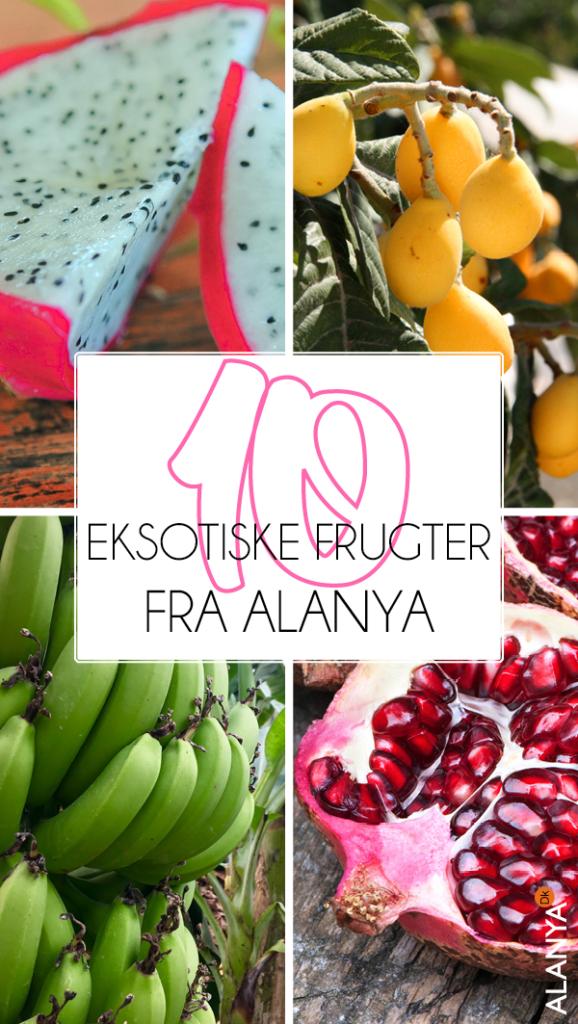 Eksotiske frugter fra Alanya, Alanya eksotiske frugter, eksotiske frugter fra Tyrkiet