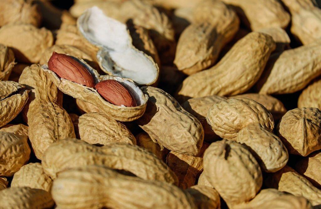 jordnødder fra Tyrkiet, tyrkisk jordnødder, jordnødder, peanuts, nødder, tyrkiske nødder