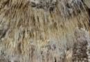 Grotter i Tyrkiet, zeytintasi grotten, zeytintas grotten, grotter tyrkiet, grotte serik, Drypstensgrotter nær Alanya, Drypstensgrotter i Antalya, drypstenshuler i Antalya, seværdigheder i Antalya