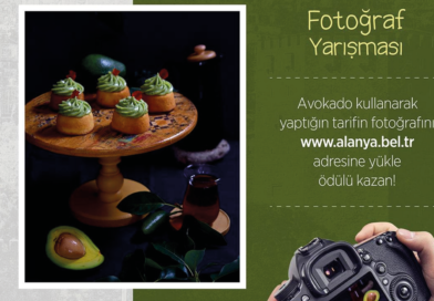 Alanya avokado konkurrence, konkurrence alanya, avokado billeder, billeder af avokadoer, Alanya nyheder, nyheder fra Alanya