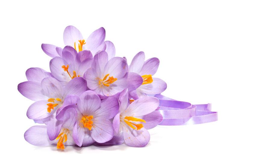 safran blomster, spiselige blomster, tyrkiske blomster, mad med blomster, tyrkisk mad kultur