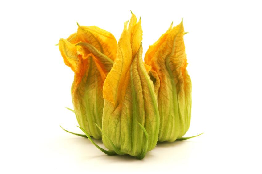 squash blomster, mad med squash blomster, tyrkisk madkultur, mad fra middelhavet, mad med blomster