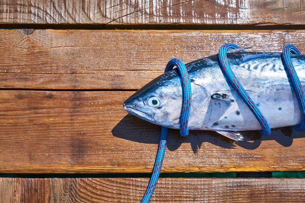Bonito, tyrkiske fisk, fisk fra Tyrkiet, fiskemarked i Tyrkiet, Fiskemarked i Alanya