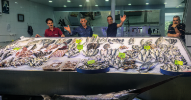 tyrkisk fiske guide, tyrkiske fisk, fiske marked Aalanya, fiske sæson, tyrkisk fiske sæson, sæson fisk i Alanya, tyrkisk fisk, friske fisk i Tyrkiet, friske fisk i Alanya