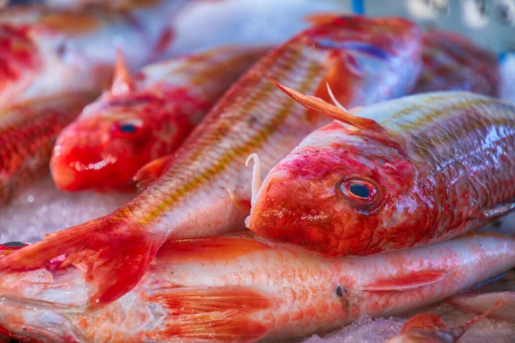 Rød mullet fisk, red mullet fisk, fisk i Alanya, fiske marked Alanya, Tyrkisk fiske parlør